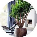 Растения - уход в домашних условиях