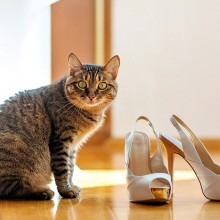 Как вывести запах кошачих меток с обуви