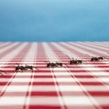 Избавление от муравьев