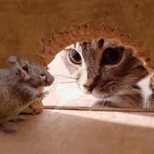 Избавляемся от запаха мышей