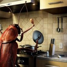 Избавляемся от жучков на кухне