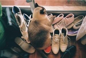 Избавляемся от запаха кошачьей мочи