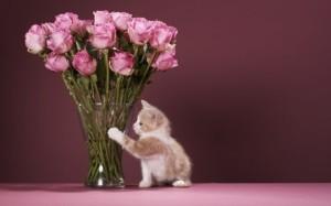Что делать, чтобы розы дольше стояли
