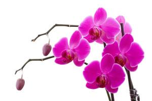На орхидее появились пятна