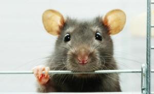 Средства против крыс