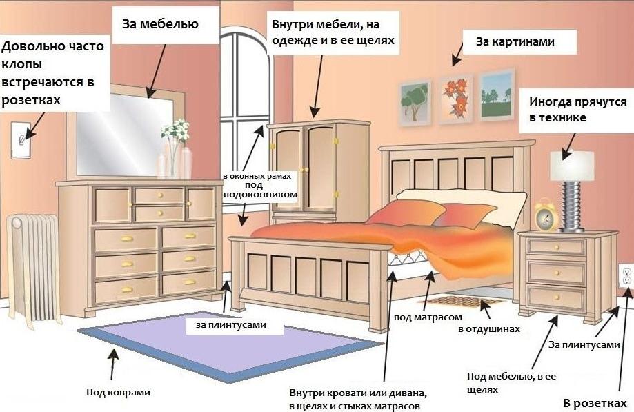 Клопы мебельные как избавиться в домашних условиях